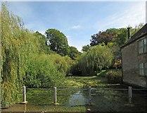 ST6601 : Pond, Cerne Abbas by Derek Harper