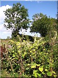 TM3795 : Overgrown ditch beside Wash Lane by Evelyn Simak
