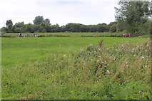 ST4286 : Damp meadow, Magor Marsh Nature Reserve by M J Roscoe