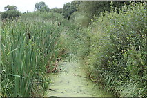 ST4286 : Reen, Magor Marsh Nature Reserve by M J Roscoe