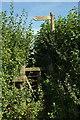 ST6501 : Path through the hedge, Cerne Abbas by Derek Harper