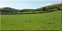 ST6501 : Fields west of Cerne Abbas by Derek Harper