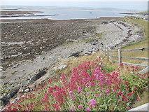 NU1341 : Lindisfarne Castle Shore by norman griffin