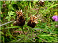 H2678 : Wild plants -2 , Aghakinmart by Kenneth  Allen