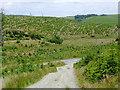 SN6750 : Coniferous plantation east of Llanfair Clydogau in Ceredigion by Roger  Kidd