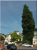 SX9364 : Kent's Road, Wellswood by Derek Harper