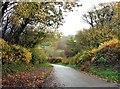 TQ6622 : Autumn in Willingford Lane near Forge Farm by Patrick Roper