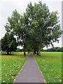 TQ2674 : Path across Wandsworth Common by Steve Daniels