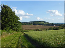 TQ5365 : Looking into the Darenth Valley by Marathon