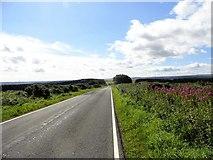 NZ0254 : Looking south down the lane at Barley Hill by Robert Graham