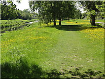 ST2425 : Footpath by the River Tone by Tony Atkin