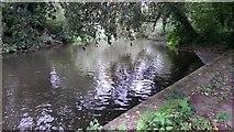 TQ0594 : River Colne by David Martin