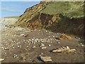 SZ3684 : Compton Bay, unstable cliffs by Paul Coueslant