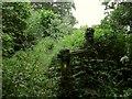 SP1866 : Footpath from Yarningale aqueduct by Derek Harper