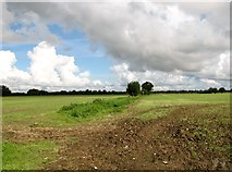 TG1301 : Field boundary north of Ketteringham Road by Evelyn Simak