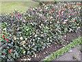 TQ2588 : Flowerbed in Northway Gardens by David Howard