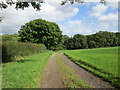 ST5607 : Bridleway to Melbury Osmond by Jonathan Thacker