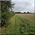 TL3445 : Towards Fountain Farm by Dave Thompson