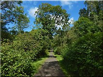 NS4175 : Avenue to Overtoun House by Lairich Rig