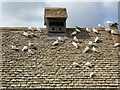 SP0933 : Doves on the roof of a dovecote by Philip Halling