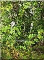 SX9066 : Trolley near Carpetright, Torquay by Derek Harper