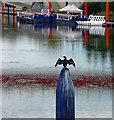 TQ3884 : Black bird, Waterworks River : Week 38
