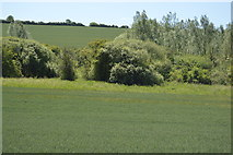 TL5234 : Trees, Debden Water by N Chadwick