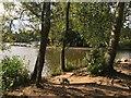 SK6363 : The lake shore at Center Parcs by Graham Hogg