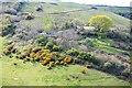 SX2051 : Gorse on a hillside by N Chadwick