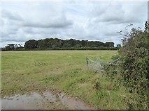 SX5497 : Waytown Plantation by David Smith