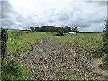SS5400 : Woodland near Westacott by David Smith