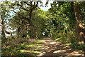 SX8869 : Milber Lane past Zigzag Quarry by Derek Harper