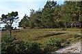 SU3905 : On the edge of Dibden Inclosure by David Martin