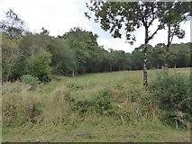 SS5401 : Field and woodland north of Medland Farm by David Smith