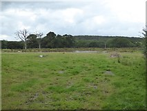 SS5402 : Lagoon in field north of Essworthy by David Smith