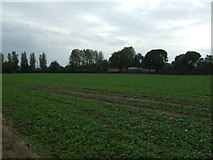 TM4494 : Crop field towards Woodlands by JThomas