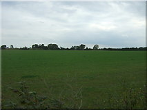 TM4592 : Field off Lily Lane, Aldeby by JThomas