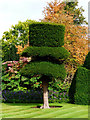 SD4985 : Topiary Levens Hall by Norman Caesar