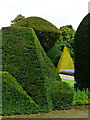 SD4985 : Topiary, Levens Hall : Week 38