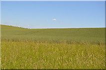 TL5335 : Rolling chalk hills by N Chadwick