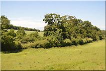 TL5336 : Trees, Fulfen Slade by N Chadwick