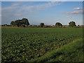 TG0929 : Field by Corpusty Road by Hugh Venables