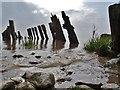 TA1128 : Humber Estuary : Week 39