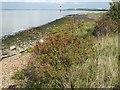 TQ6974 : The Saxon Shore Way by Shornmead Fort by Marathon