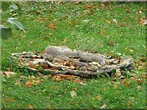 NS4865 : Fungi on a tree stump by Thomas Nugent