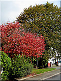 SO9096 : Autumn colours in Penn, Wolverhampton by Roger  Kidd