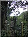 SX4265 : Footpath in Hangingcliff Wood by David Smith
