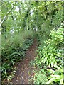 SX4365 : Footpath into Hangingcliff Wood by David Smith