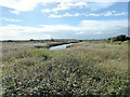TQ9319 : Rye Harbour Nature Reserve by PAUL FARMER