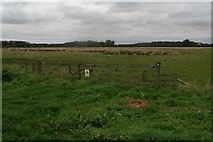 SE9914 : Marsh grazing next to Carr Lane, Bonby, and Land Drain by Chris